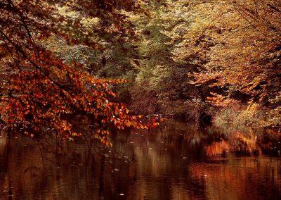 20100220_1724705381_krutynia-mazury-krajobrazy_8